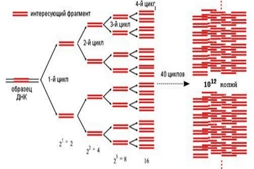 Metod-PCR