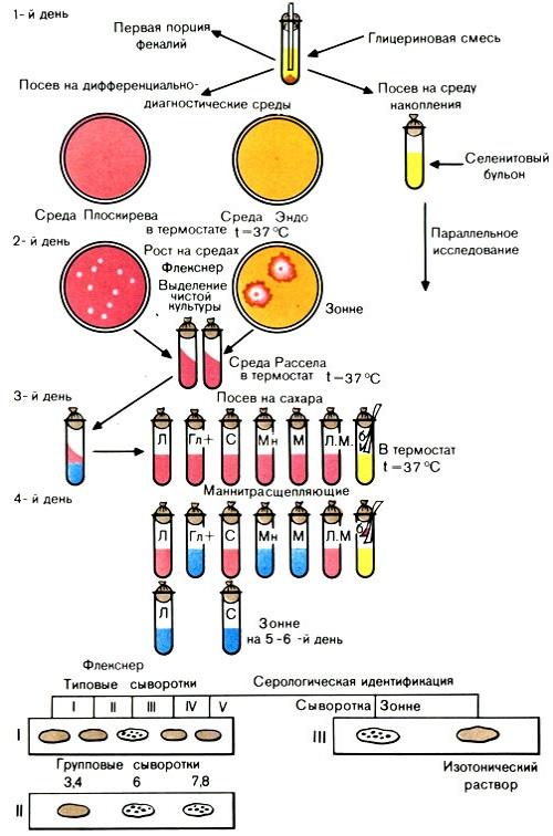 Bakteriologicheskoe-issledovanie