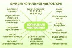 Normalnaja-mikroflora-funkcii