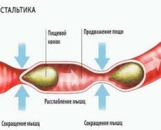 Peristaltika-kishechnika