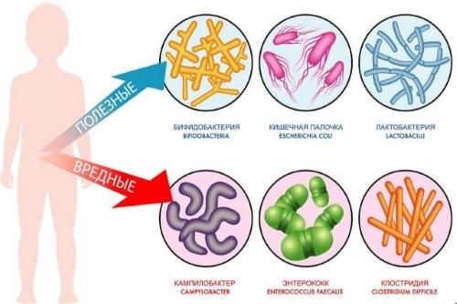 Poleznye-i-vrednye-bakterii