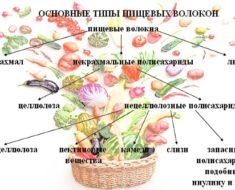 Tipy-pishhevyh-volokon