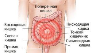 Колоноскопия толстого кишечника
