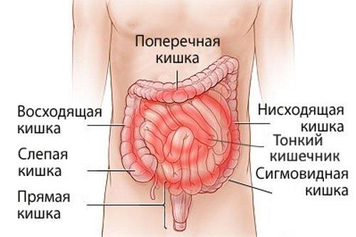 Zabolevanija-kishechnika