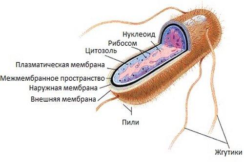 Kishechnaja-palochka