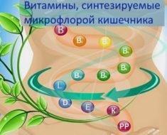 Vitaminy-sinteziruemye-mikrofloroj-kishechnika