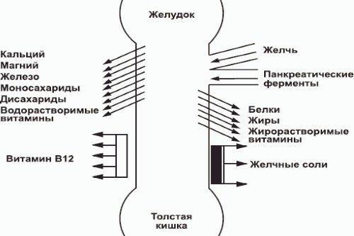 Vsasyvanie-veshhestv-v-tonkom-kishechnike