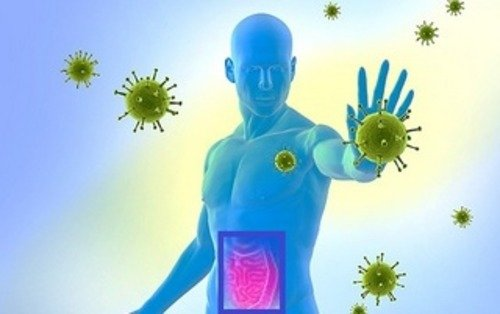 Механизмы влияния кишечника на иммунитет