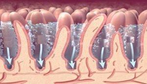 Сбор кала на дисбактериоз у грудничка