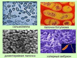 Возбудители болезней