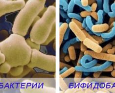 Лактобактерии, бифидобактерии