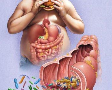 Влияние микрофлоры на вес