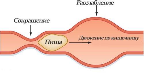 Моторика кишечника