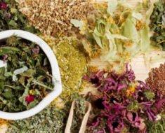 Травы для лечения желудка